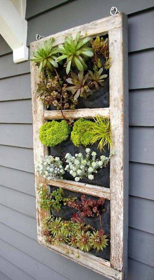Wall Frame for Pretty Succulents