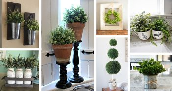 Farmhouse Plant Decorations