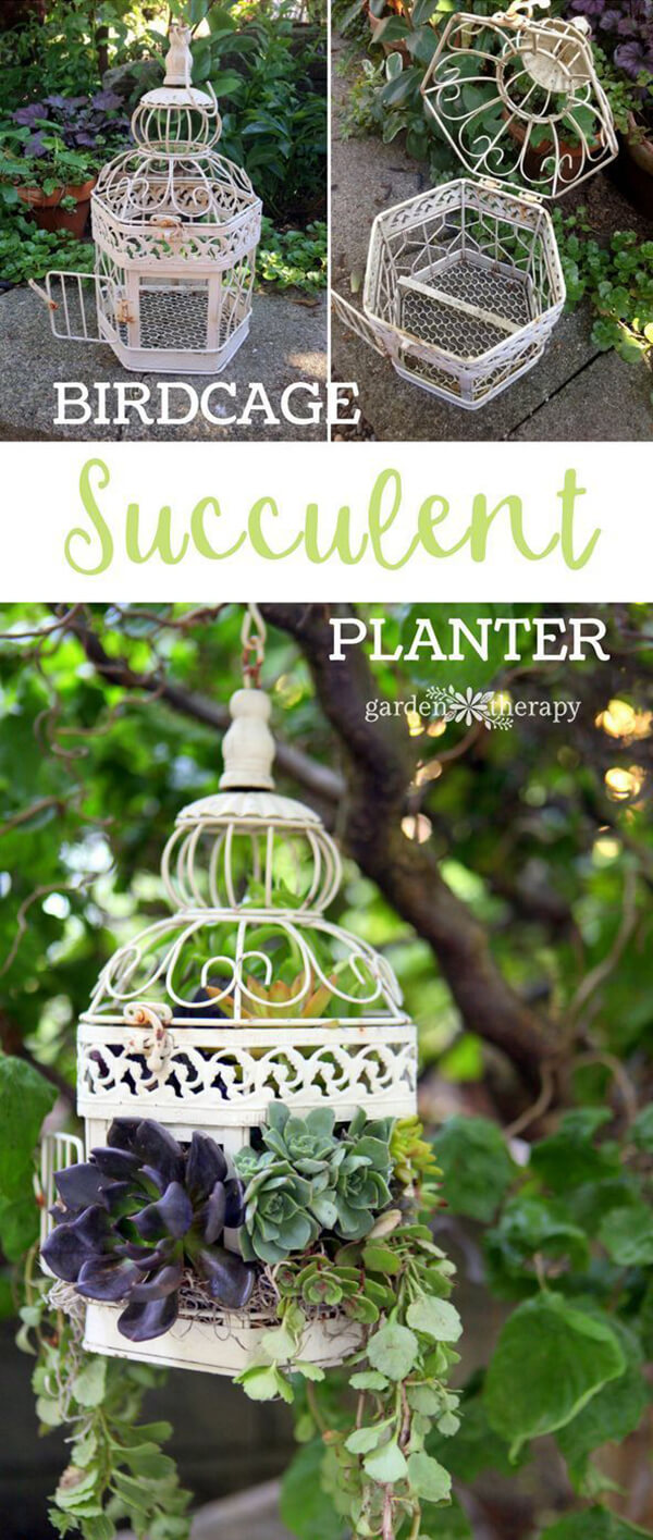 Hang Different Succulents in an Old Birdcage