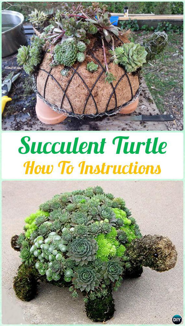 Create an Adorable Turtle Planter