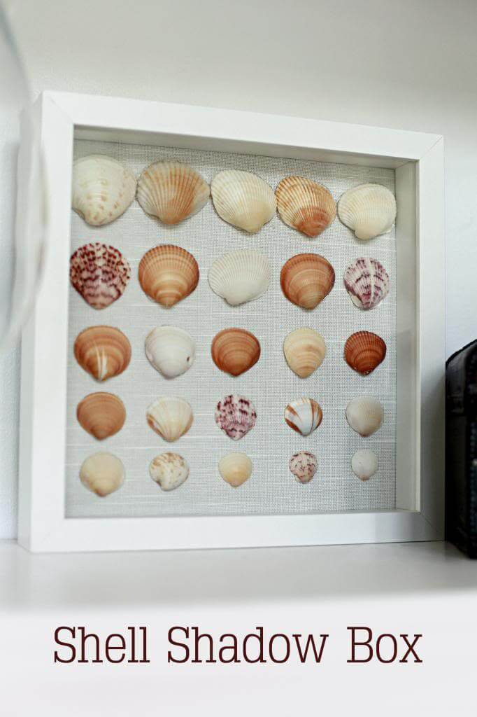 Shadow Box with Beautiful Scallop Shells