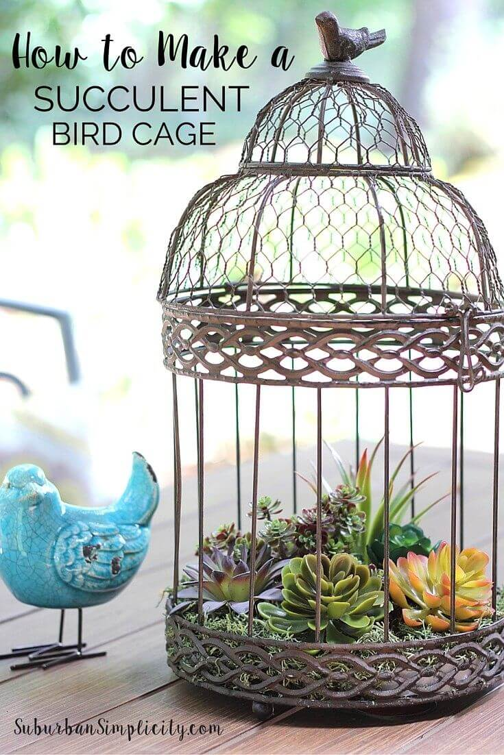 Fill an Antique Bird Cage with Succulents