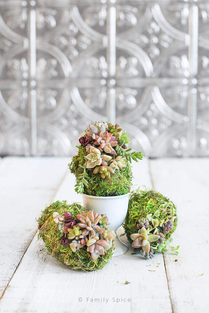 Moss-Covered Succulent Eggs In a Cup