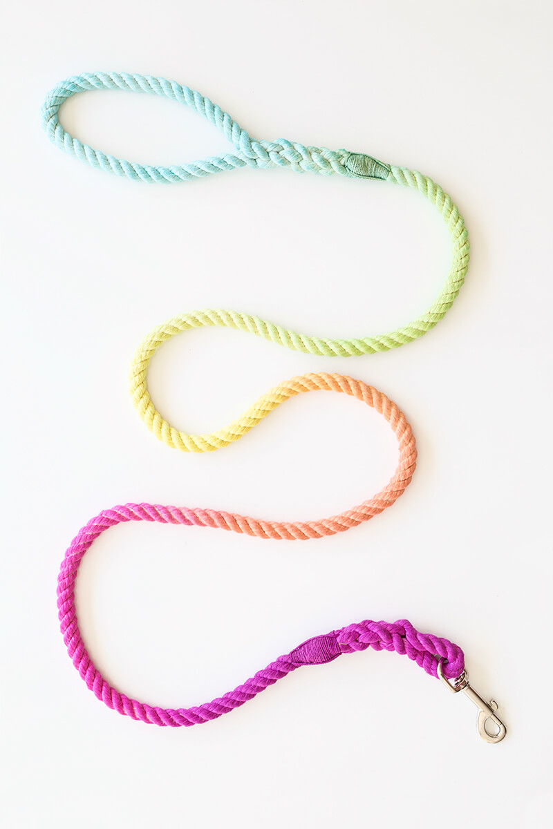 DIY Multicolored Dog or Cat Leash