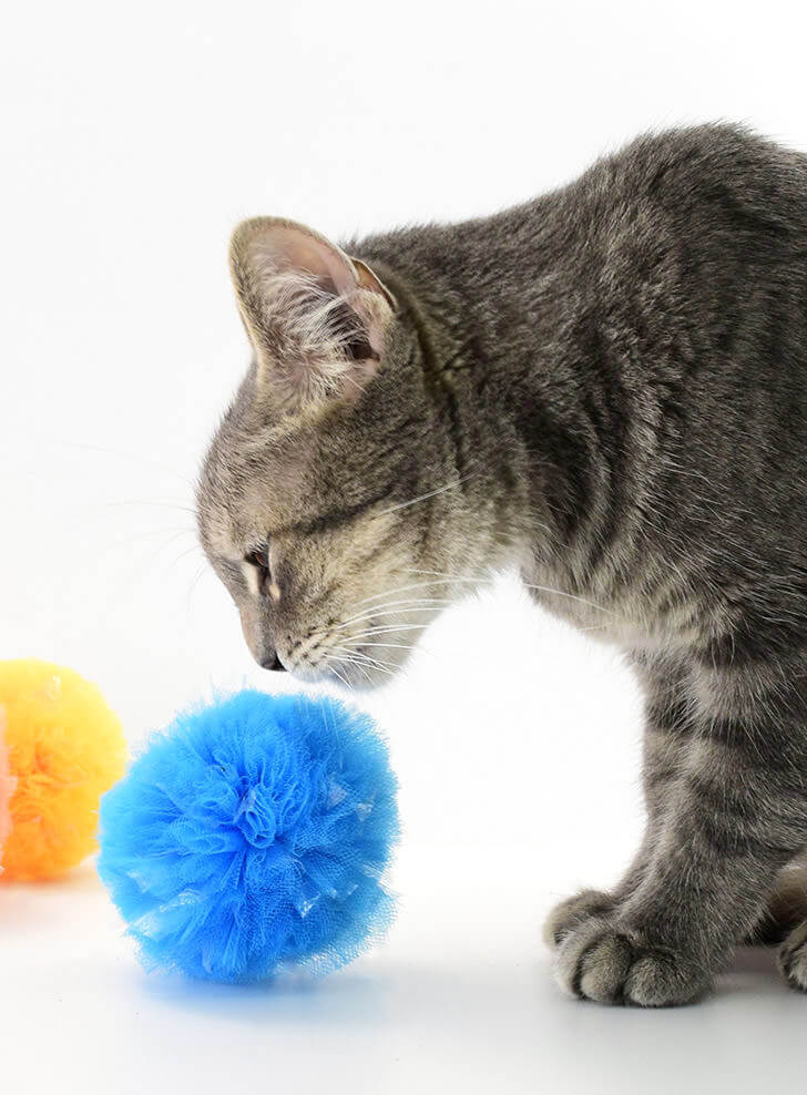 DIY Fluffy Pom-poms for Cats