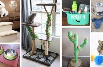 DIY Projects for Pets