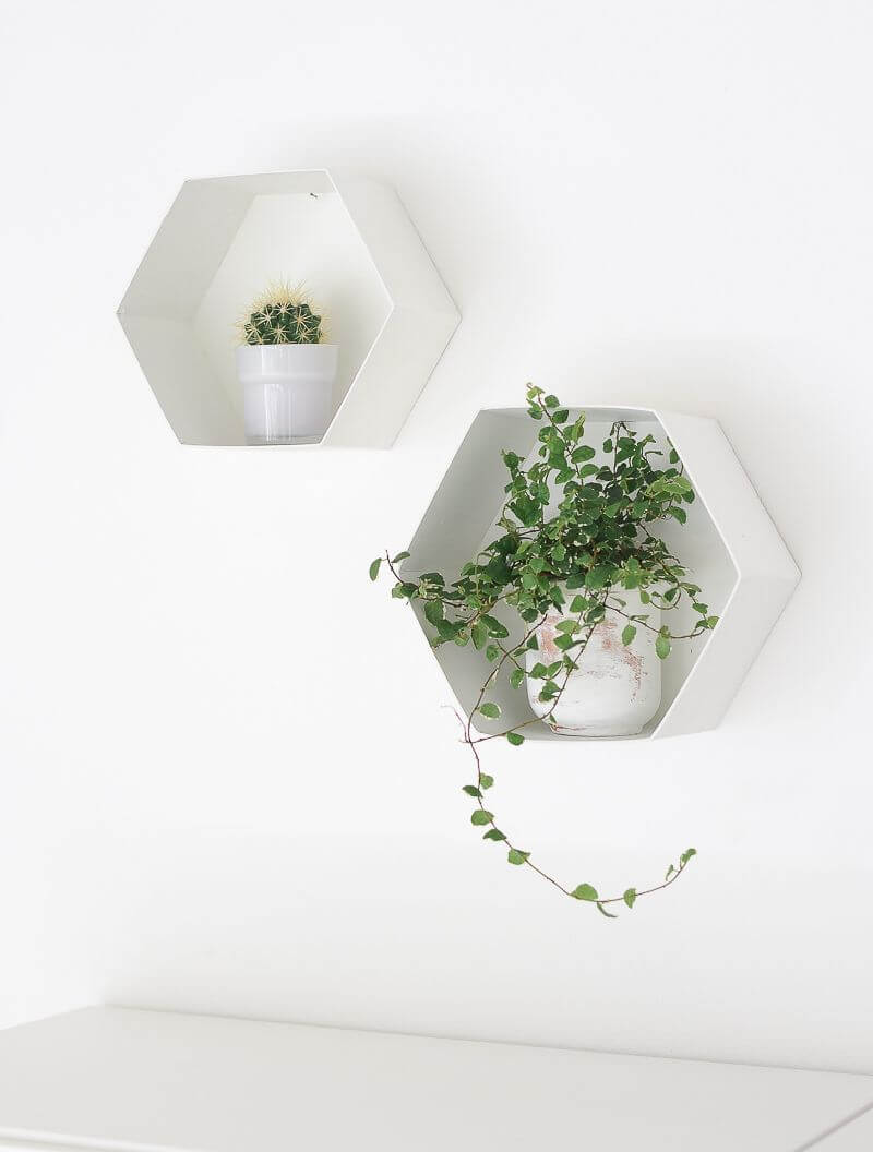Minimalist Wall Decorations With Plant Life