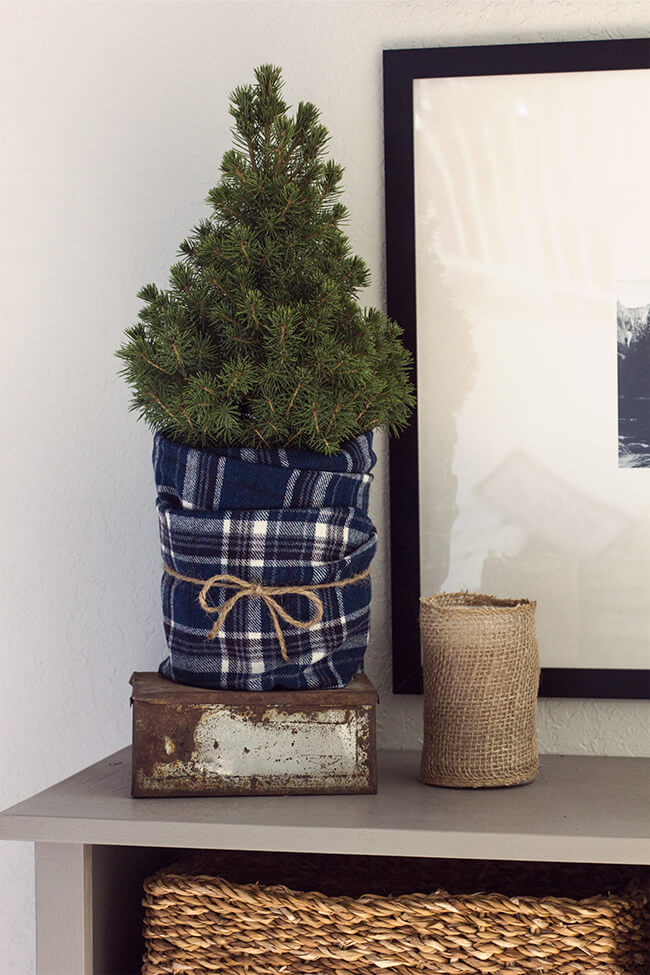 Petite Tree Wrapped in Blue Flannel