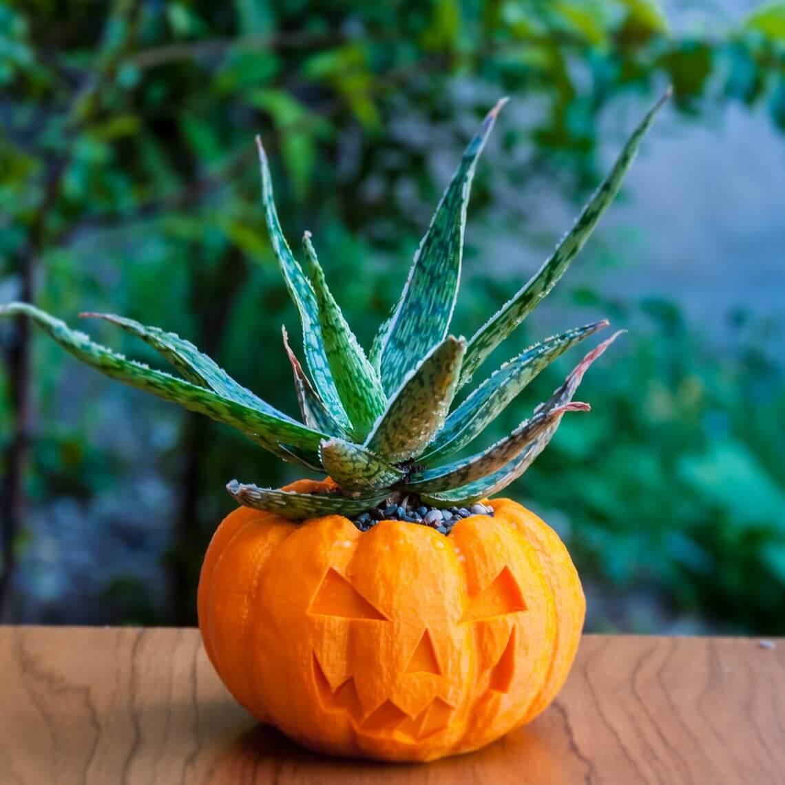 Customizable Pumpkin and Jack-O-Lanterns