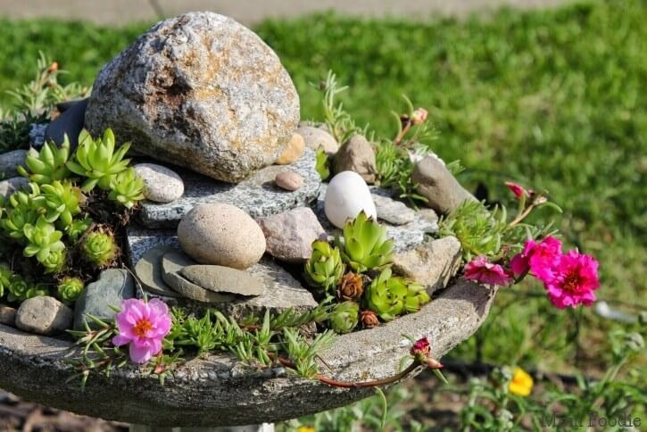 Bird Bath Succulent Garden with River Stones