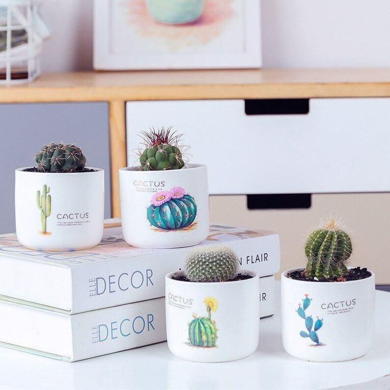 Cute Four Planter Pack