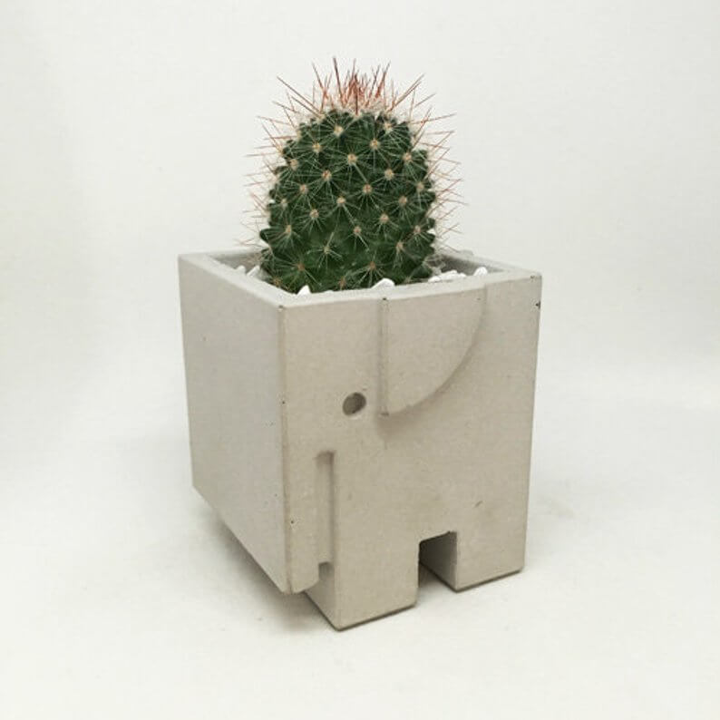 The Elephant in the Room (and the Succulent in the Elephant)