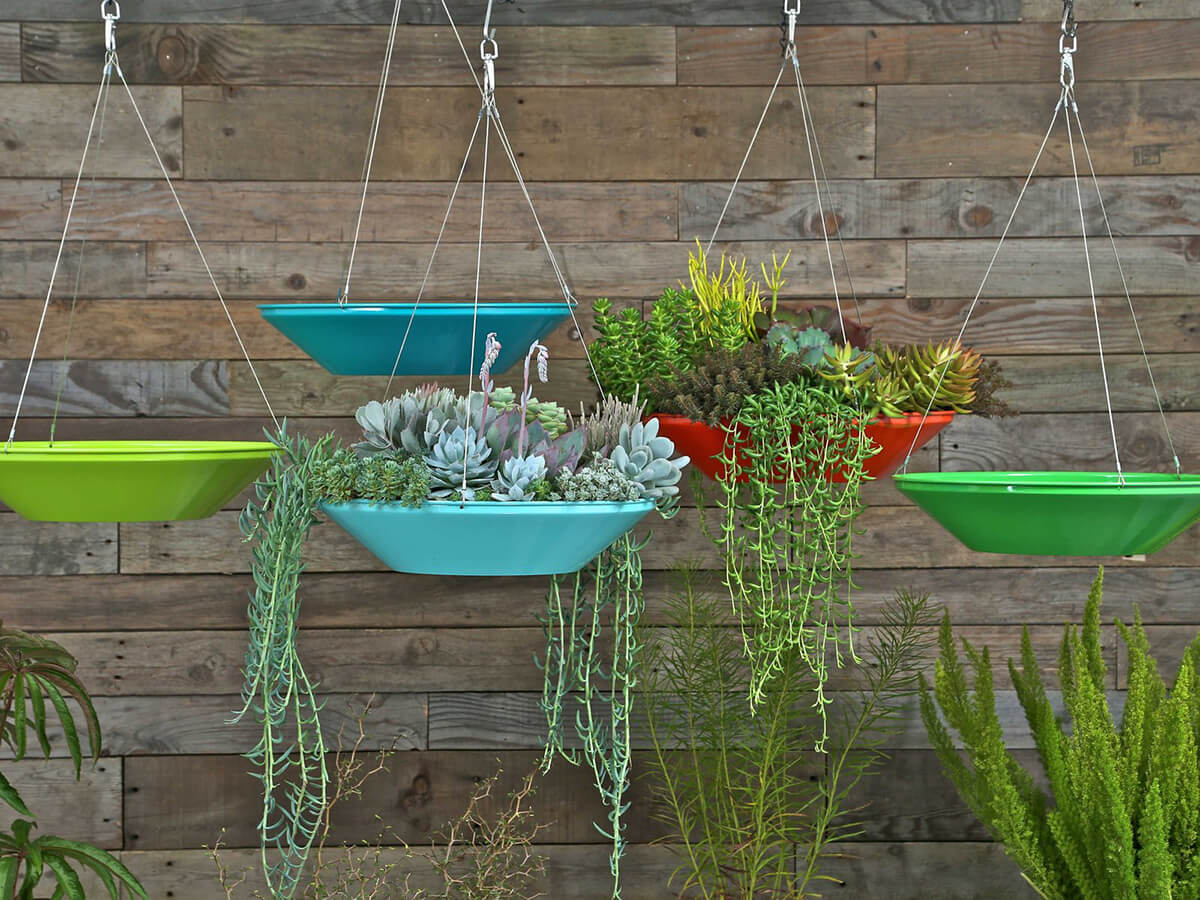 Hovering Glass Dish Planter for Succulents