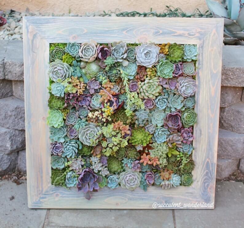 Framed Succulent Wall Planter Garden Art<