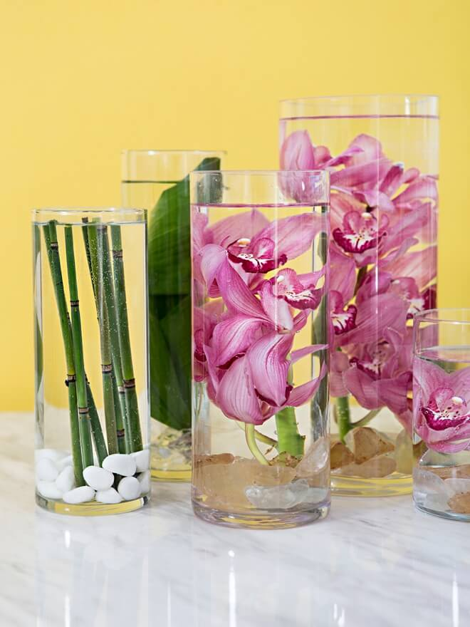 Elegant, Tropical Orchids Submerged in Water
