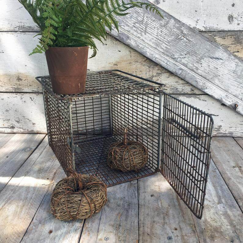 Great Wire Plant Display with Upcycled Animal Cage
