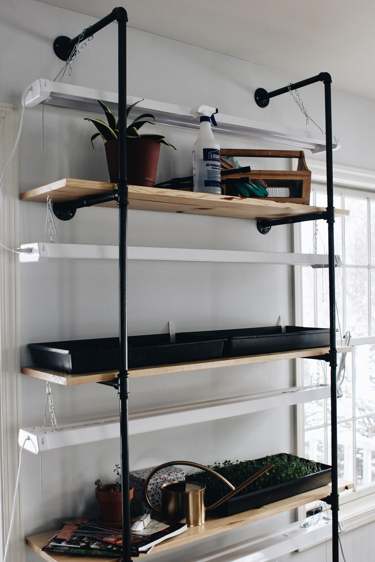 Indoor Garden on Shelves Made of Pipe and Wood