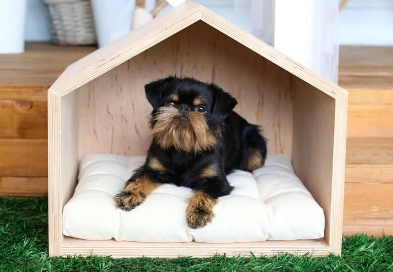 Petite Outdoor Dog Kennel for Daytime Use