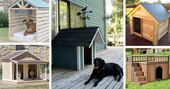 Cool Outdoor Dog Houses