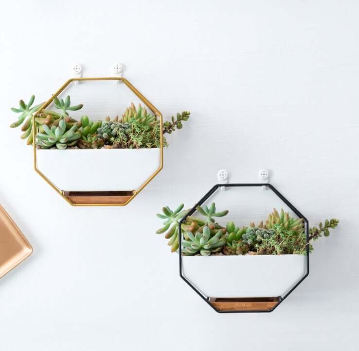 Floating Octagon Planter Shelves
