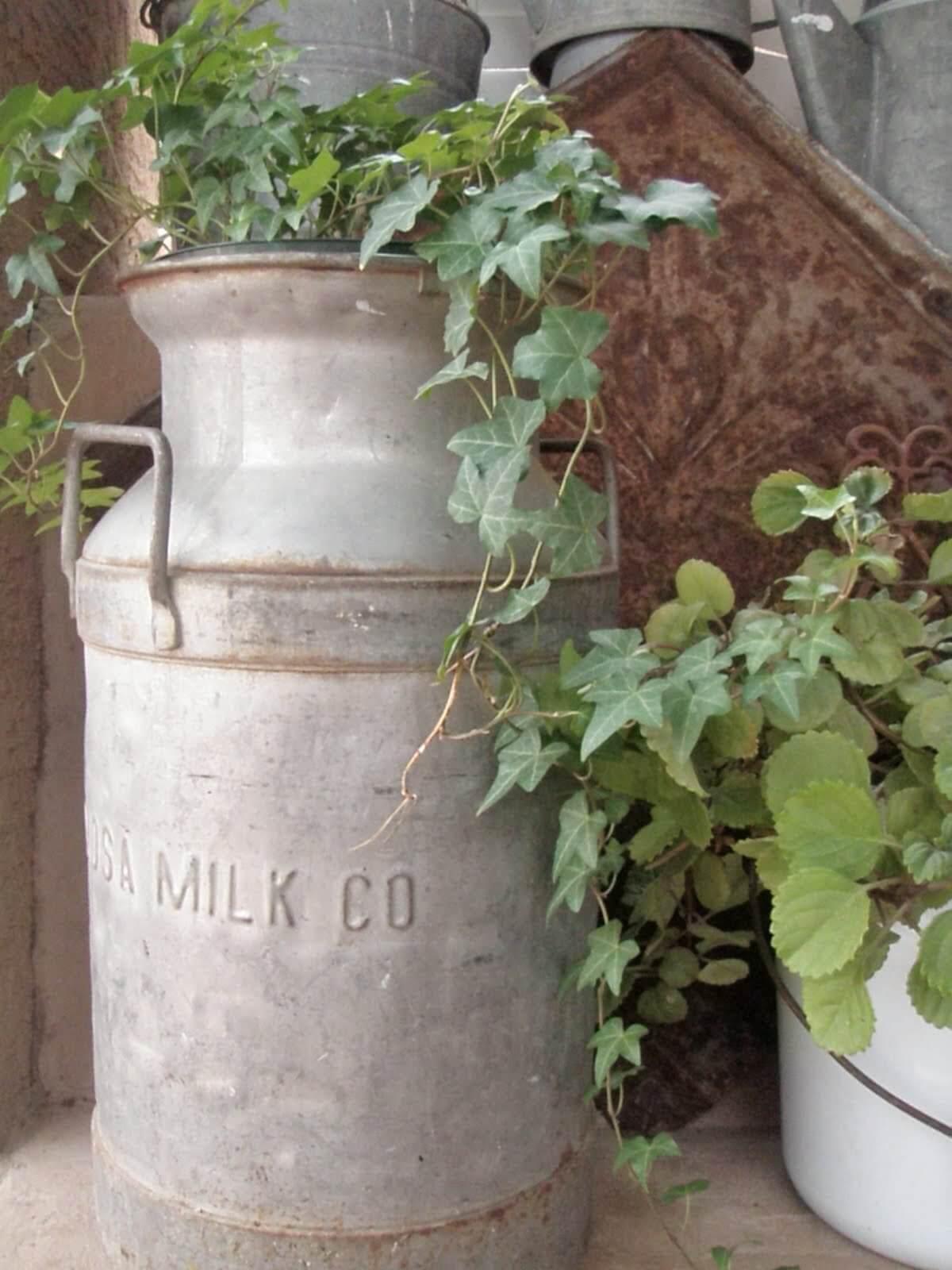 Beautiful Classic Clean Iron Milk Can