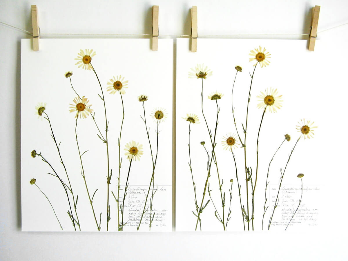 Wildflowers Hung Out to Dry on the Line Wall Art