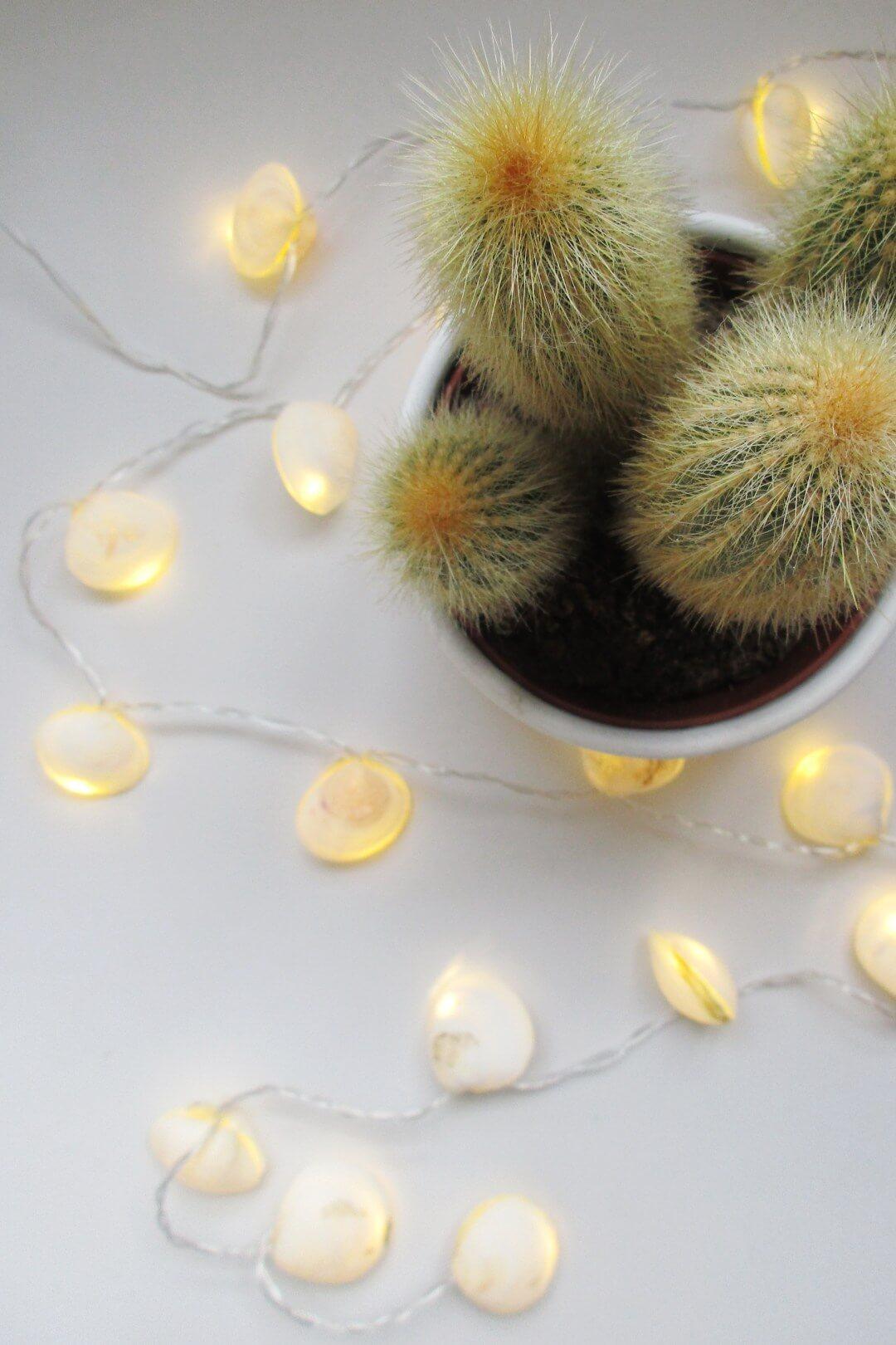 Coastal Decor Seashell String Lights