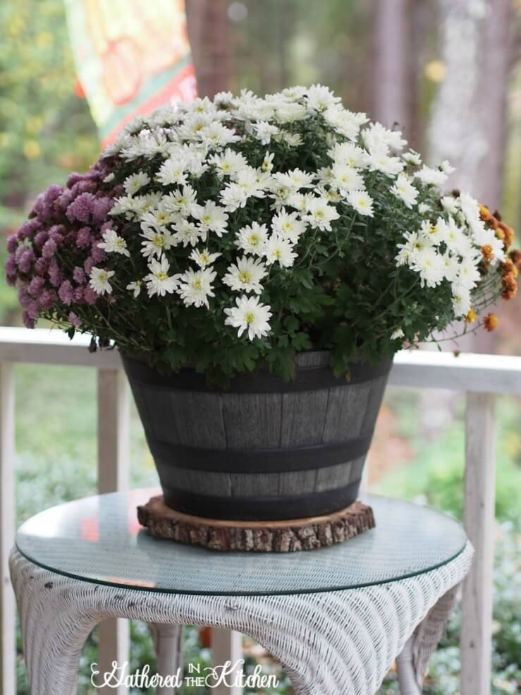 Large Rustic Potted Plant Décor