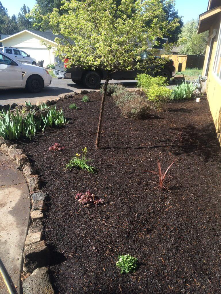 Stunning Dark Mulch Flowerbed Transformation