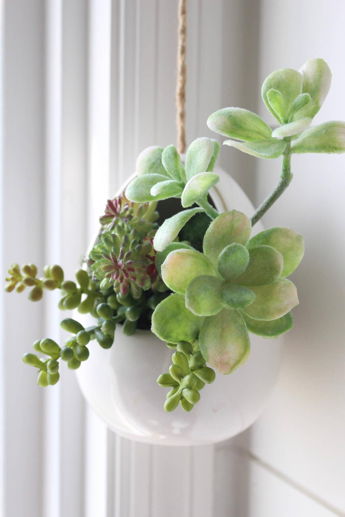 One-of-a-Kind Hanging Succulent Arrangement