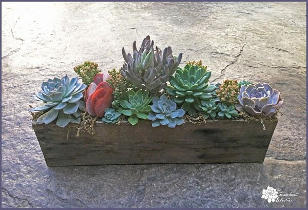 Sophisticated Succulents All in a Row