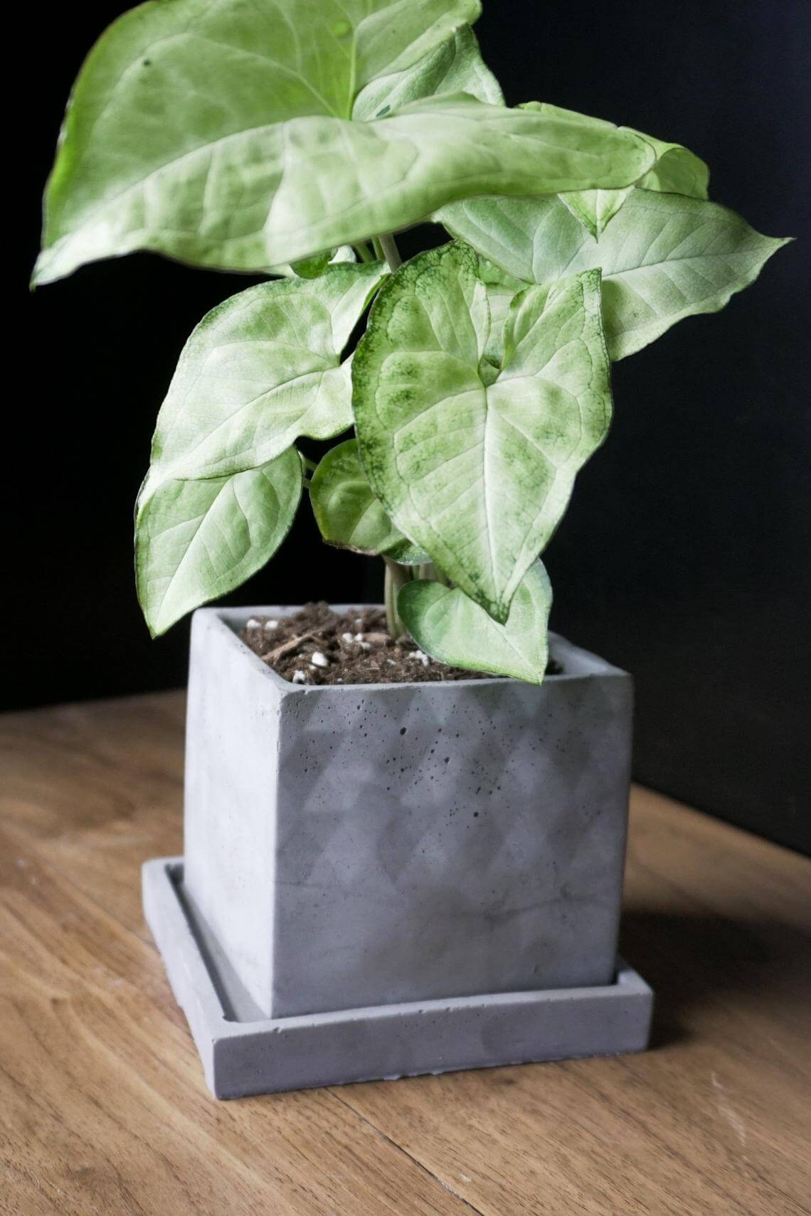 Cool and Contemporary Concrete Square Planter