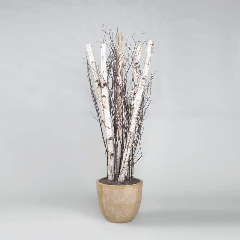 Floral Centerpiece Real White Birch Branches