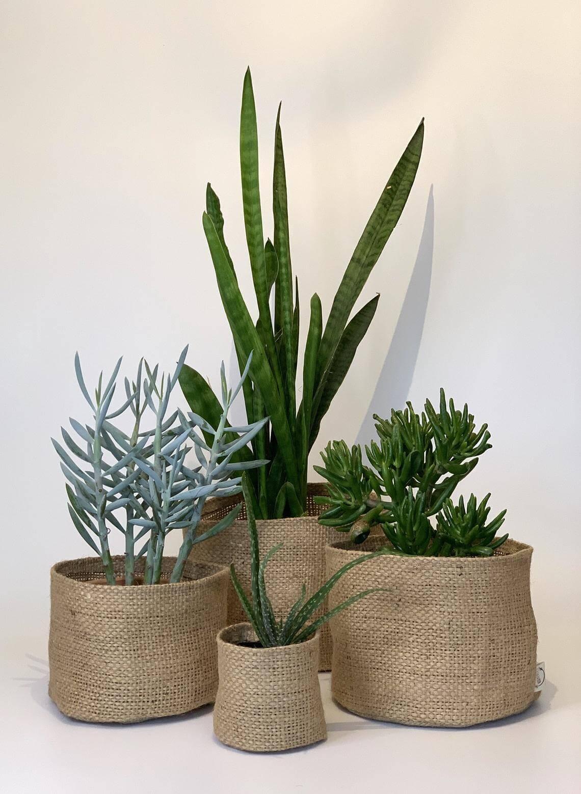 Repurposed Coffee Sacks Plant Covers