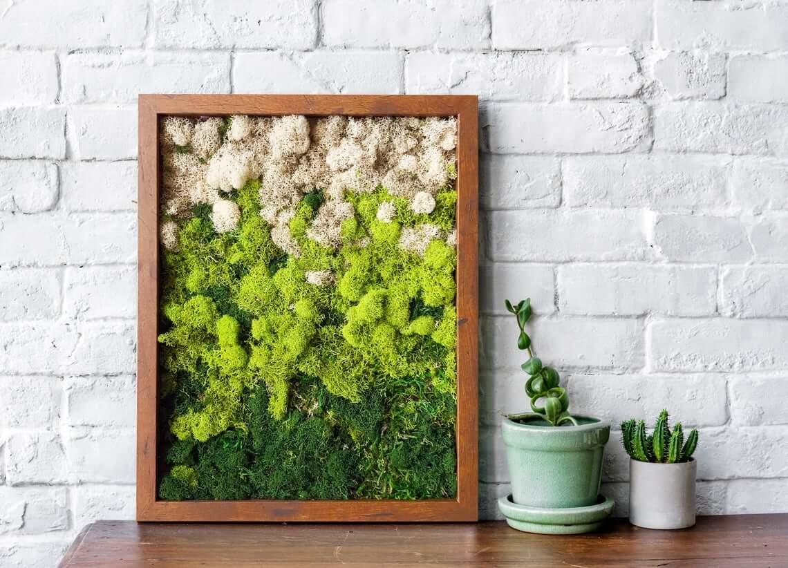 Preserved Terrarium Moss Wall Decor