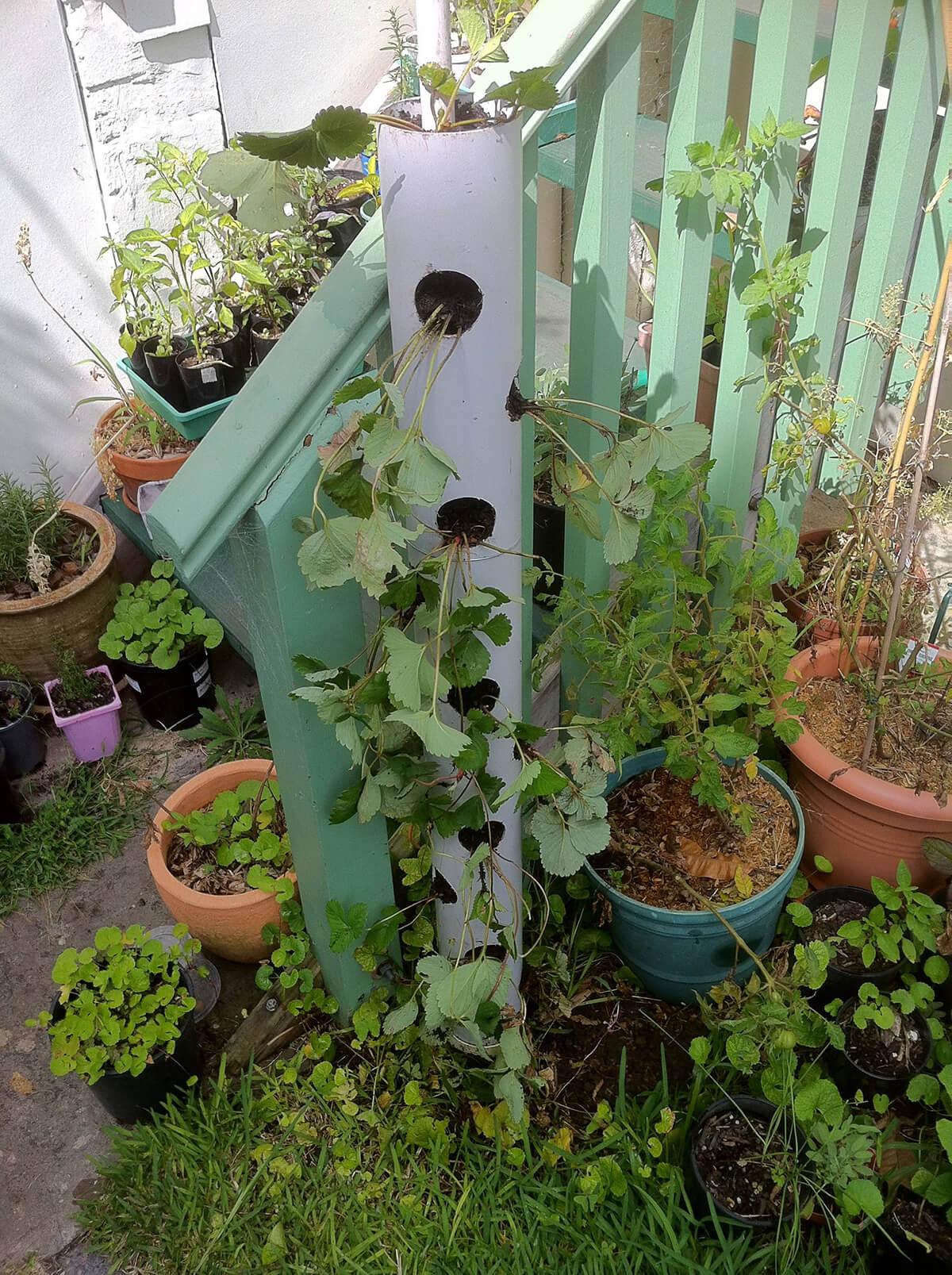 Repurposed Bird Feeder Garden Planter