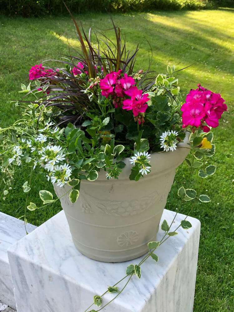 A Pot of Flowers to Enhance Your Home Decoration
