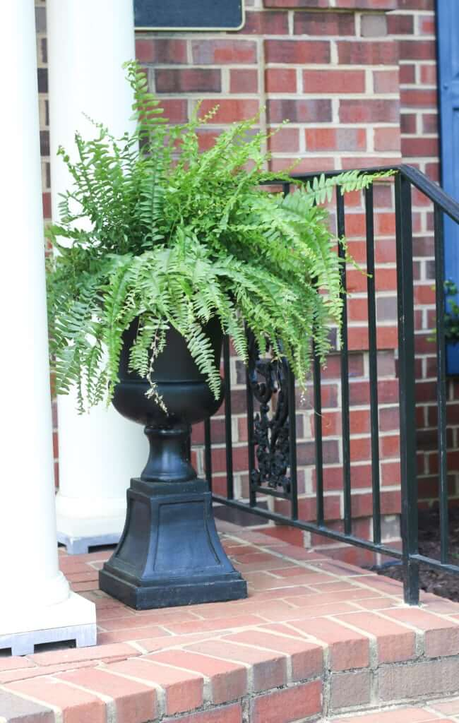 Dramatic and Classic Black Urn Pedestal Planter