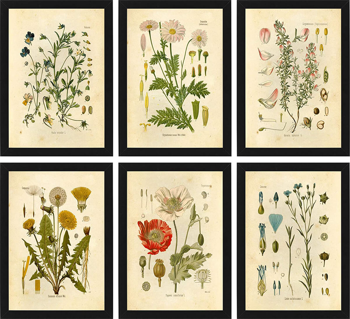 Collection of Six Floral Botanical Prints