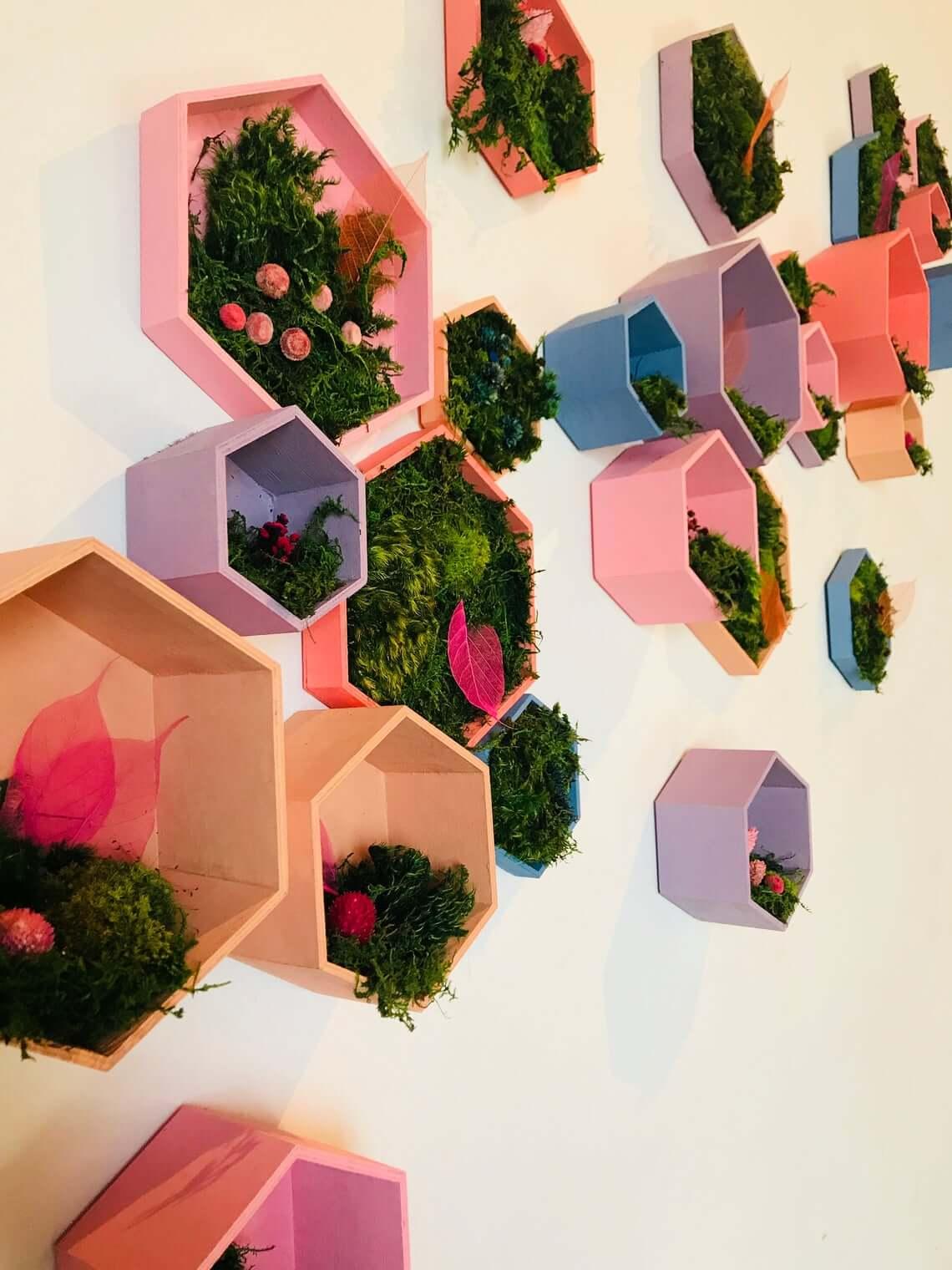 Hexagon Moss Terrarium Wall Designs