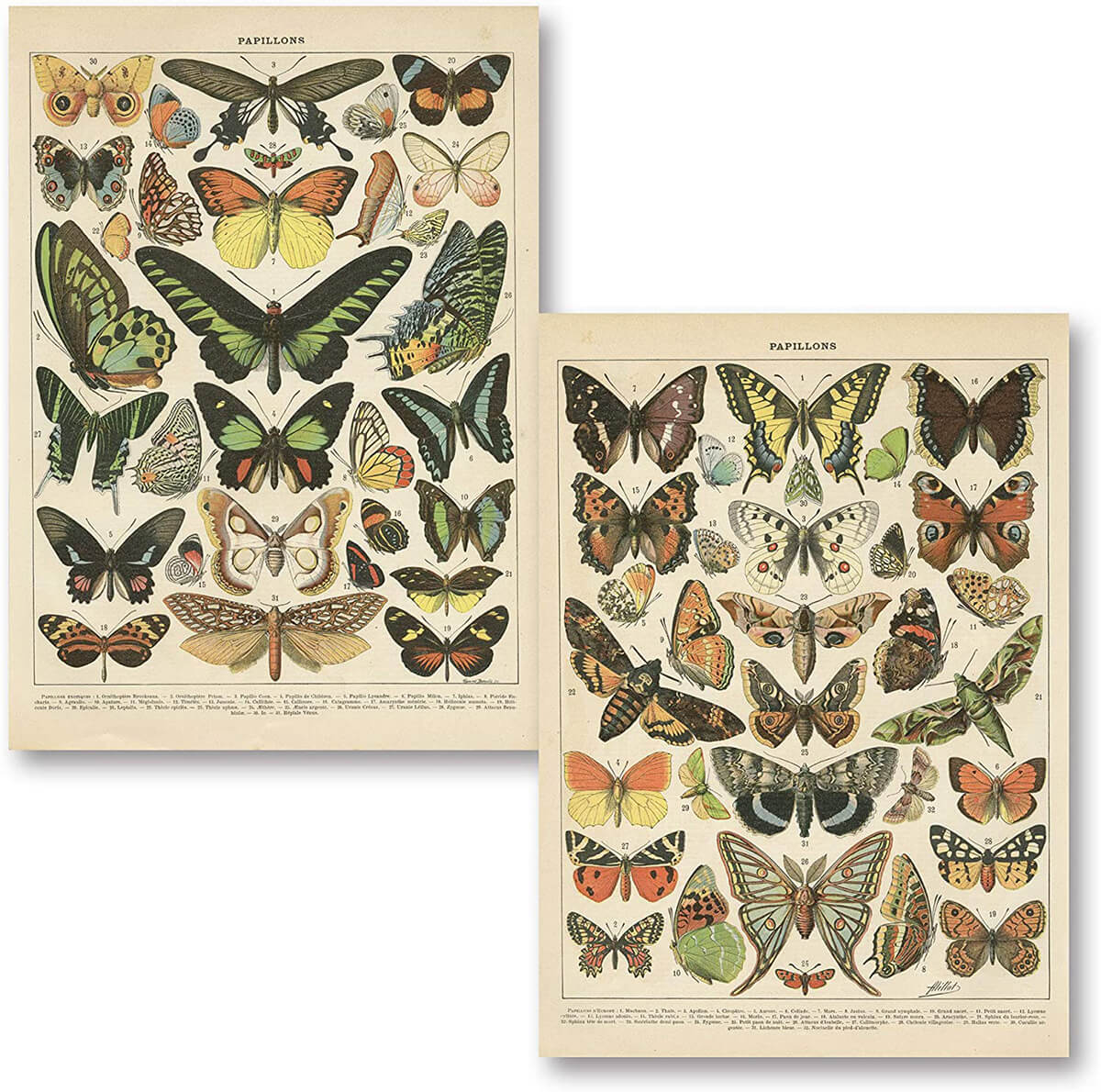 Set of Two Vintage French Butterfly Prints