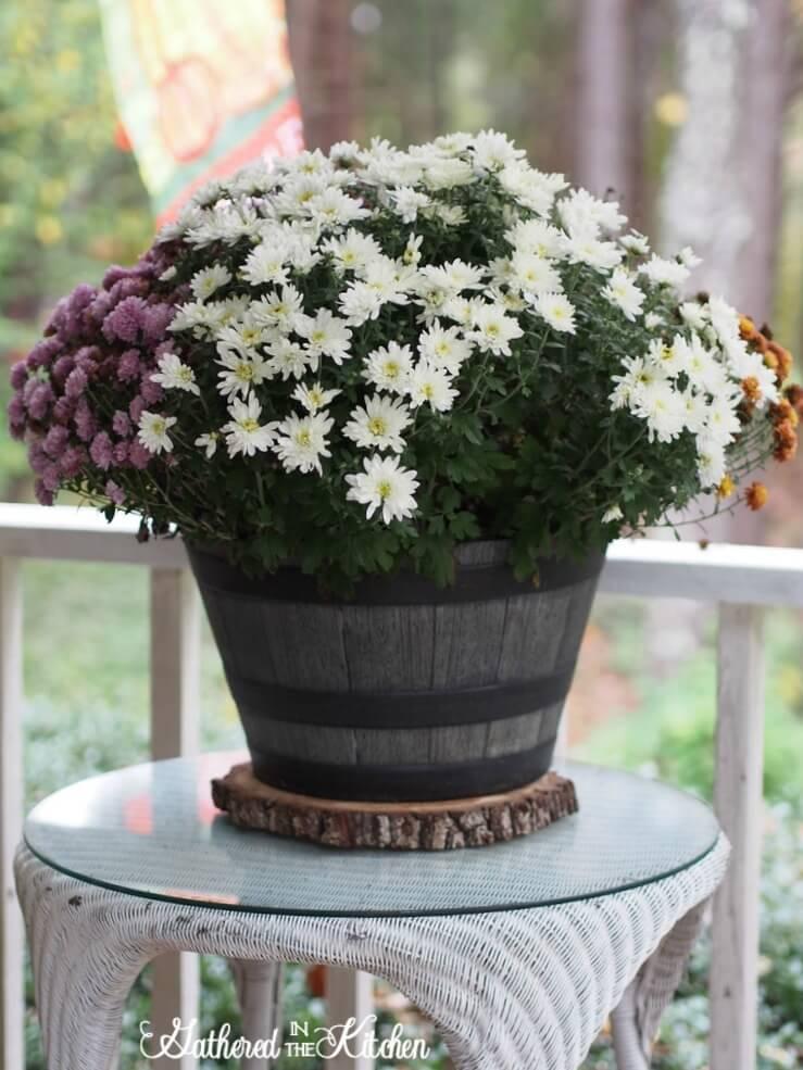 Large Rustic Potted Plant Décor