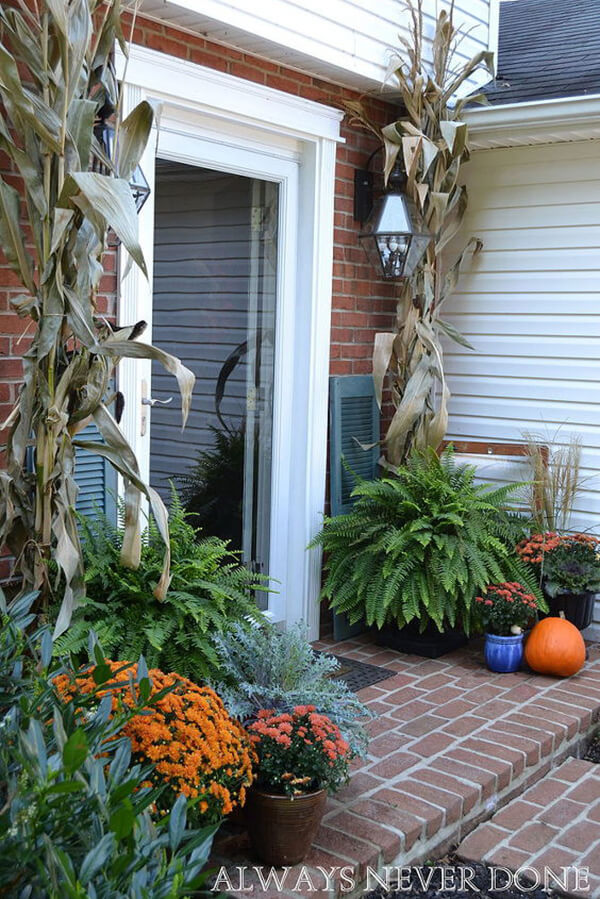 Creatively Arranged Plants and Shutters