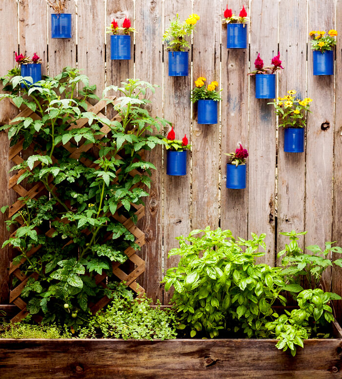 Charming Soup Can Special Individual Fence Planters