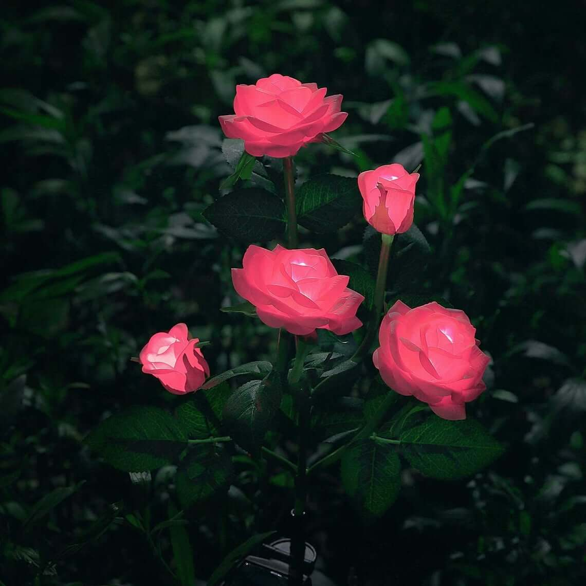 Light Up the Night with Solar Roses