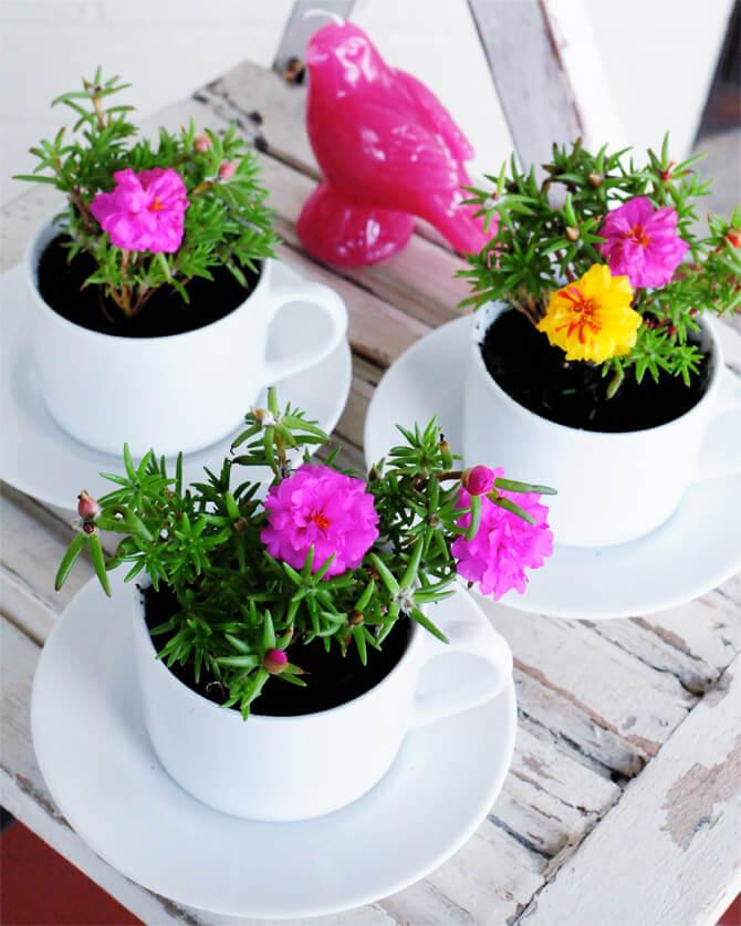 Timeless Teacup Rose Moss Garden Set