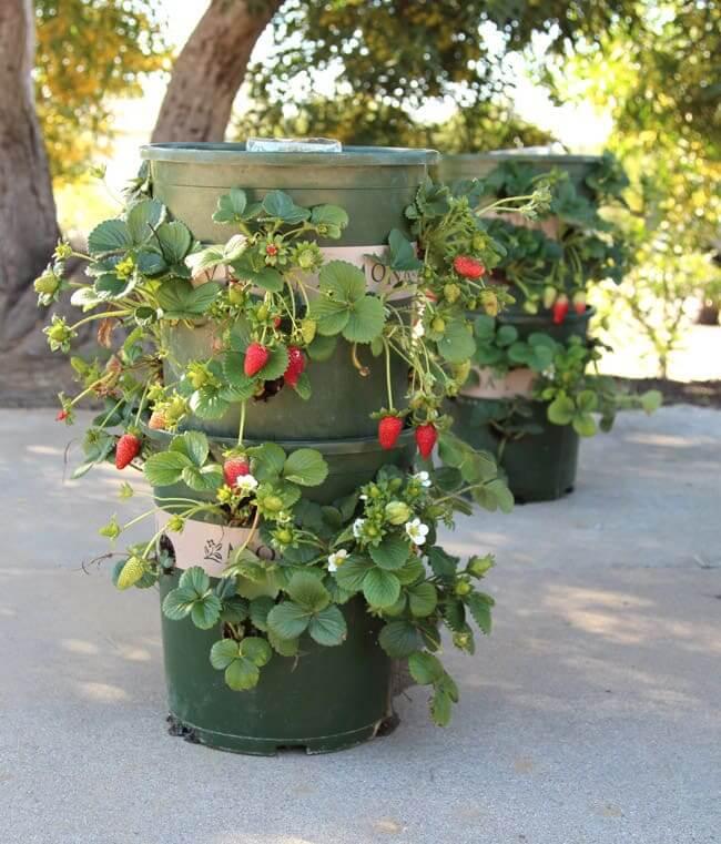Strawberry Tower from Nursery Buckets