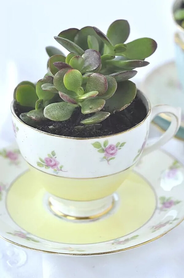 Dainty and Delicate Floral Succulent Teacup