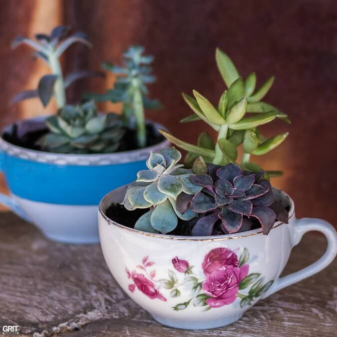 A Cup o' Succulents Garden Goodness