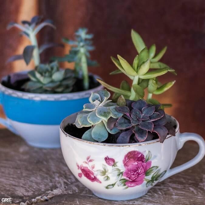 A Cup o' Succulents Garden Goodness